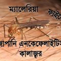 Drawing Competition on Dengue Malaria